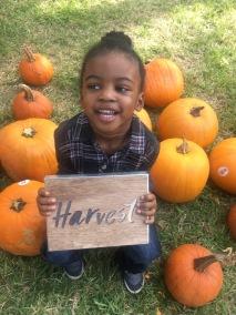 Harvest handsome