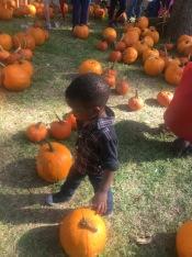 Pumpkin march