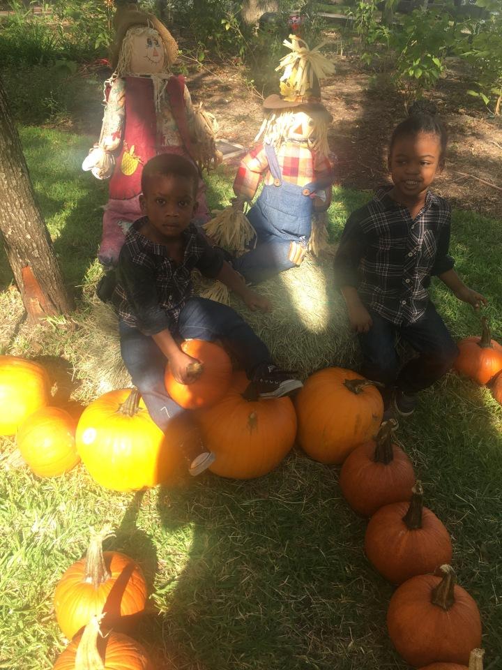 My Pumpkins Are GrowingUp